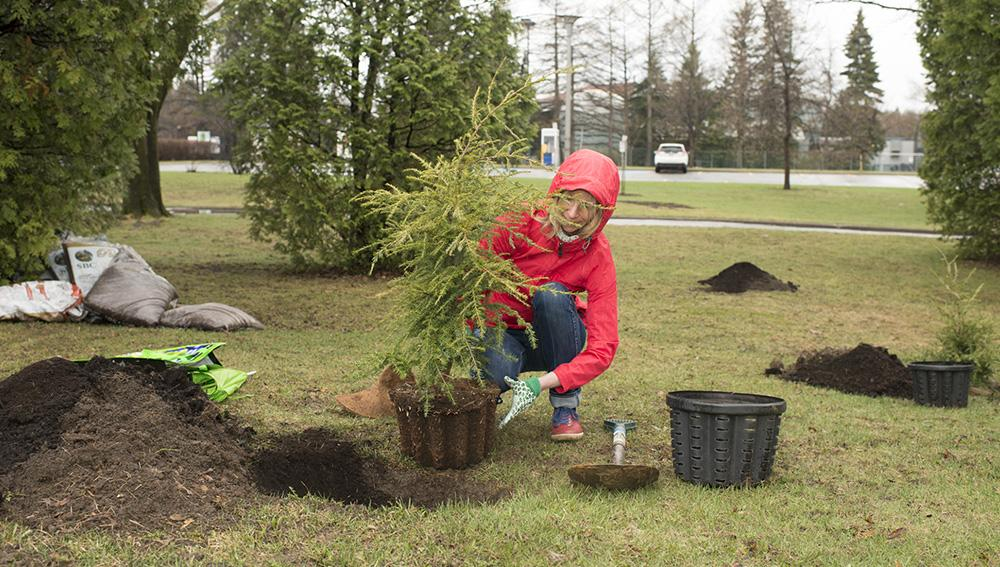 Woman planting a tree for the Jour de la Terre program